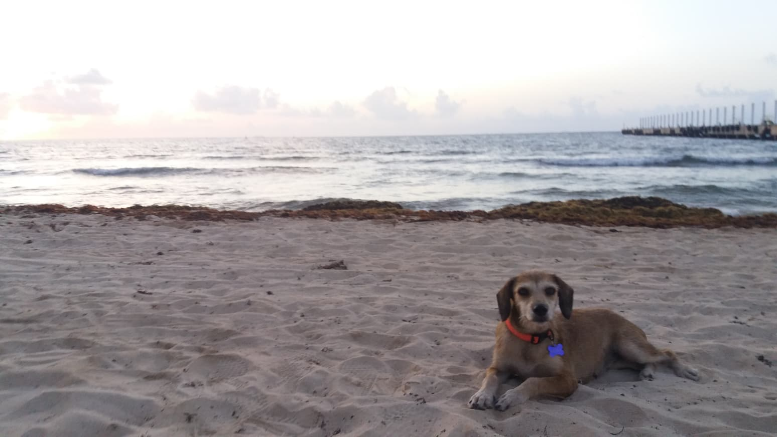 Malala en la playa de Playa del Carmen